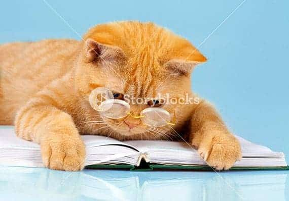 cat reading book stock photography