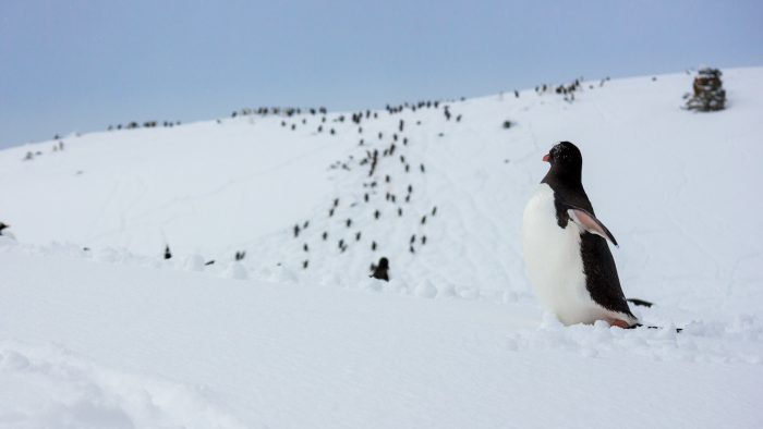 Antartica Photography Guide