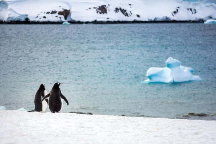 Antarctica Photo Tip: Get a Zoom lens to capture the Wildlife