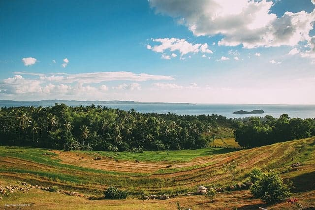 landscape of a rice field going downhill with the ocean in the horizon
