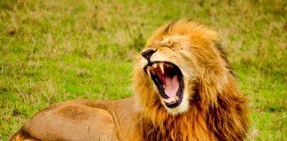 Best Nikon Telephoto Lenses for Wildlife