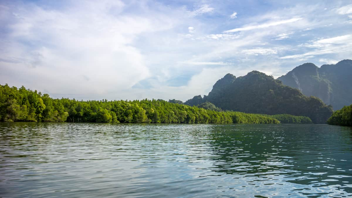 What to photograph in Thailand - Mangrove Forests
