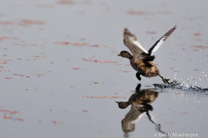 Nikkor 200-500mm f/5.6 ED autofocus test bird