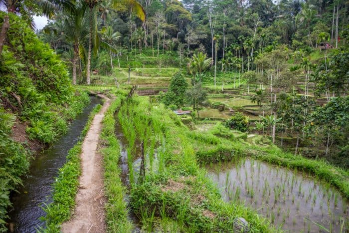 Essential travel photography gear - Rice terraces in Bali
