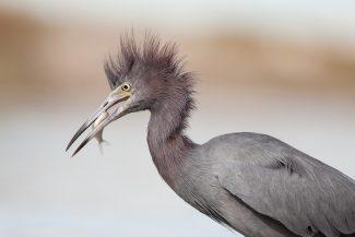 Wildlife lens for wildlife shot