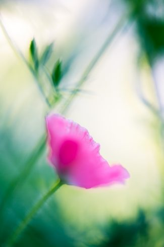 Use manual focussing to improve your photos