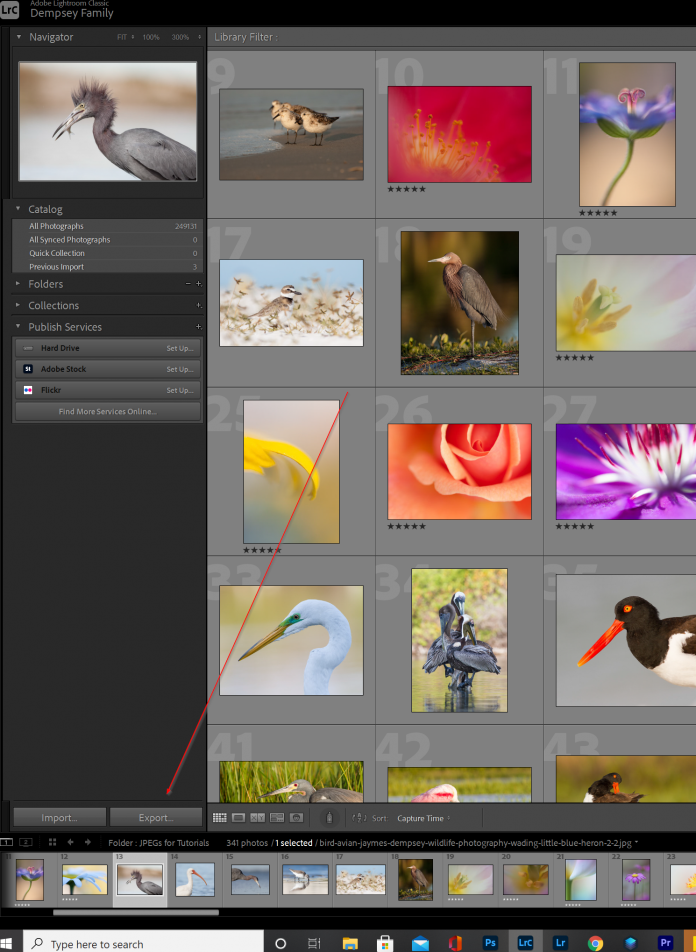 Are you looking for how to install Adobe Lightroom, fast? This step-by-step guide will tell you everything you need to know!
