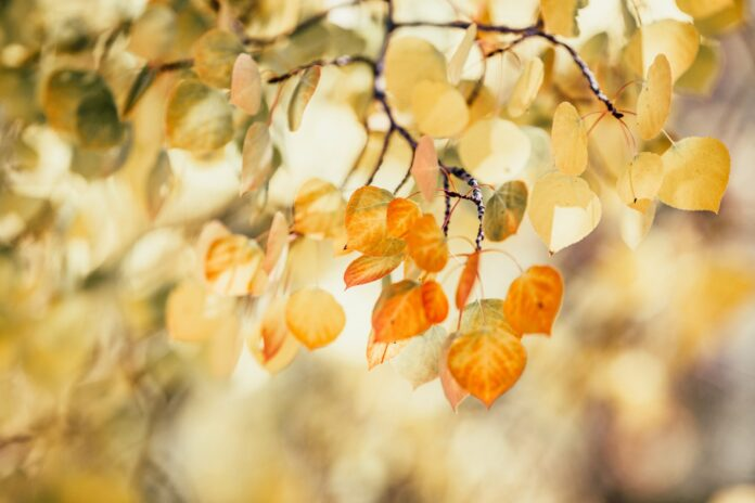 leaves with shallow depth of field